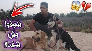 شوفوا وش حصلت في مدينة الكلاب مع روكي ولوسي !! انصدمت من اللي شفته😱💔