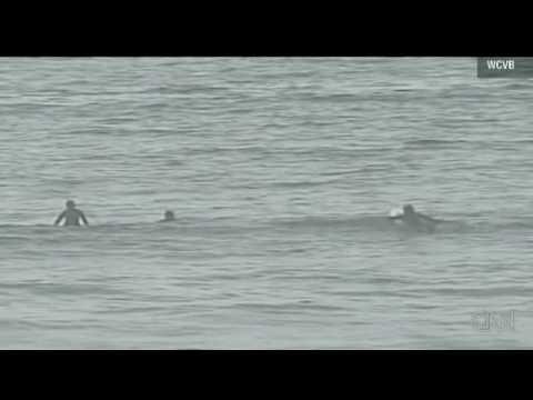 !!GREAT WHITE SHARK WARNING!!