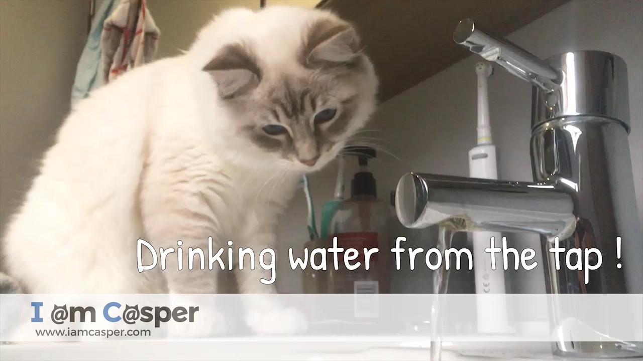 Cats and water - Casper loves drinking from running water tap - YouTube