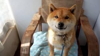 http://balu.ocnk.net/ Puppy&Kitty BALU園部 愛情いっぱい育てた子を、...