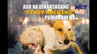 aso-na-binansagang-pinoy-hachiko-pumanaw-na-nxt