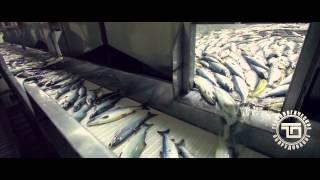 транспортировка   рыбы   горизонтальная(, 2013-09-21T10:19:18.000Z)
