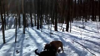 Отвлечение от игры и подзыв собаки(, 2015-03-22T02:35:43.000Z)