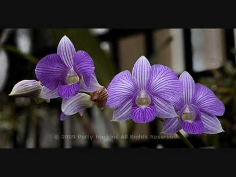 Mar Mar Aye- May Kwet Ko Shar (with Myanmar Orchids).Myanmar Song.