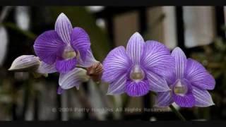 Mar Mar Aye- May Kwet Ko Shar (with Myanmar Orchids).Myanmar Song.