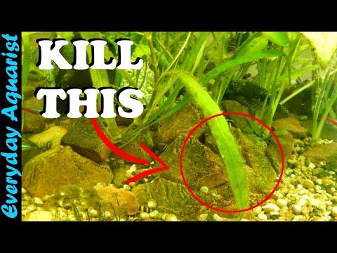 3 Tips To Control Aquarium Algae