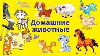 ДОМАШНИЕ ЖИВОТНЫЕ видео для детей КРОЛИК/ЩЕНОК/КОШКА/ПОПУГАЙ КАКАДУ/ЛОШАДЬ/КОТЁНОК/ОВЦА/КОРОВА