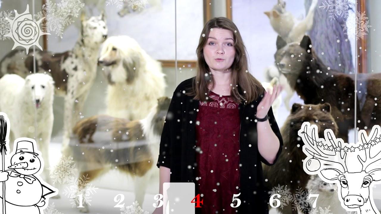 Что смотреть в новогодние праздники? В 2018 с Дарвиновским музеем