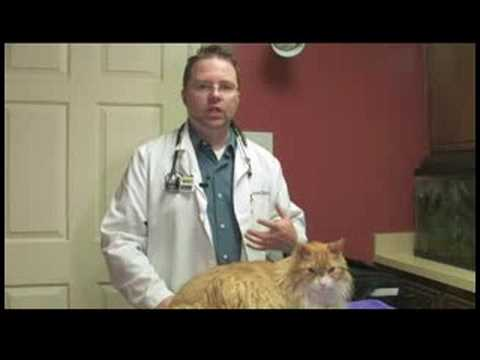 Cat Health Care Tips : How To Tell If A Cat Is Pregnant