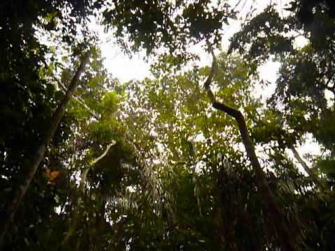 Bolivia | Madidi National Park | The Sun is Shining, the Birds are Singing