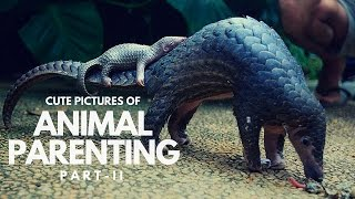 Cute Pictures of Animal Parents and Babies | Animal Parenting Part 2 | Animal Parental Care
