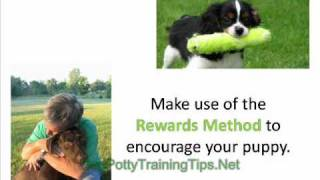 Dog Potty Training - Train Your Dog to Use the Toilet