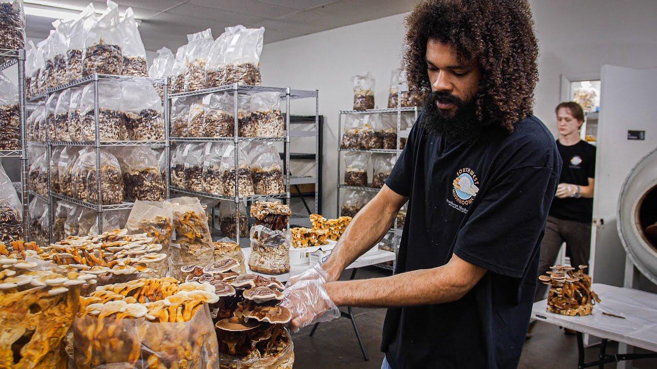 Growing Pioppino Mushrooms and Reishi Harvest | Southwest Mushrooms