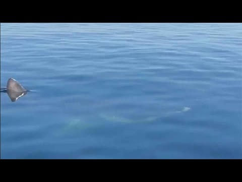 Greg Kretschmar - Large Shark Sighting Off York Beach, Maine!