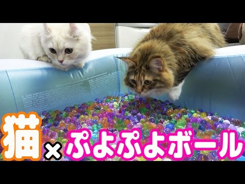 Played with a cat and Puyo Puyo ball bath/TWINS