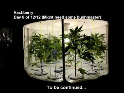Medical Cannabis Sealed Grow Tent with Spinner Flowering Unit  sc 1 st  YouTube & Medical Cannabis Sealed Grow Tent with Spinner Flowering Unit ...