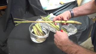 Growing Lemongrass from the grocery store