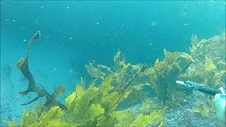 """#스피어건#작살#다이빙 """"물속에 들어가야 그파…"""