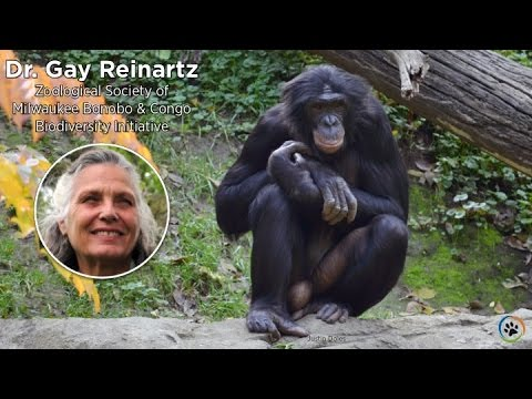 Bonobo & Congo Biodiversity Initiative · Dr. Gay Reinartz · Expo 2014