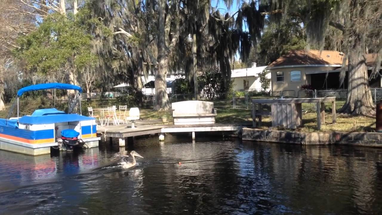 Lake rousseau florida wild shinner fishing trip youtube for Out of state fishing license florida