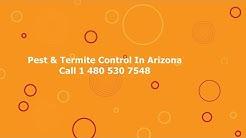 24/7 Termite Control Tempe AZ Arizona Pest Removal