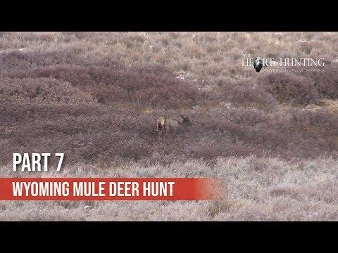FOUND WOLF ATTACKED ELK - Wyoming Mule Deer Hunt (Part 7 Of 10)