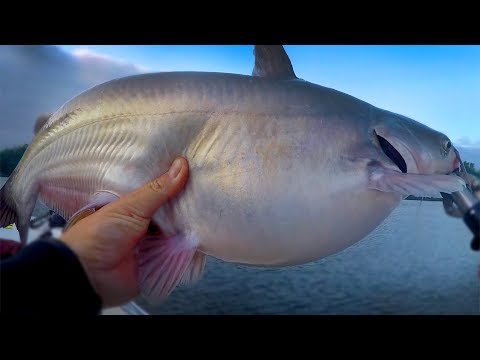 The End Of The Catfish Spawn - When Does The Catfish Spawn End - Where Do Catfish Spawn