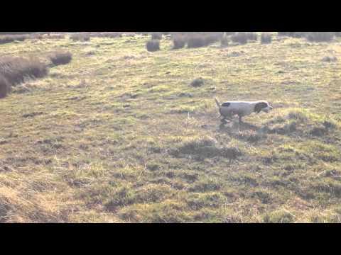 OFTW - Colcourt Sparky of Boundarymoor