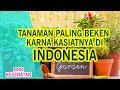 LUAR BIASA!! TANAMAN PALING BEKEN KARNA KASIATNYA DI INDONESIA