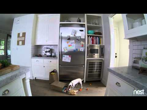 Чем домашние животные занимаются в отсутствие хозяев: 5 лучших видео со скрытых камер