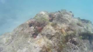 treasure found ! Jupiter inlet Beach South Florida  !!