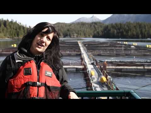 Salmon Farming -- BC Farms, BC Opportunities