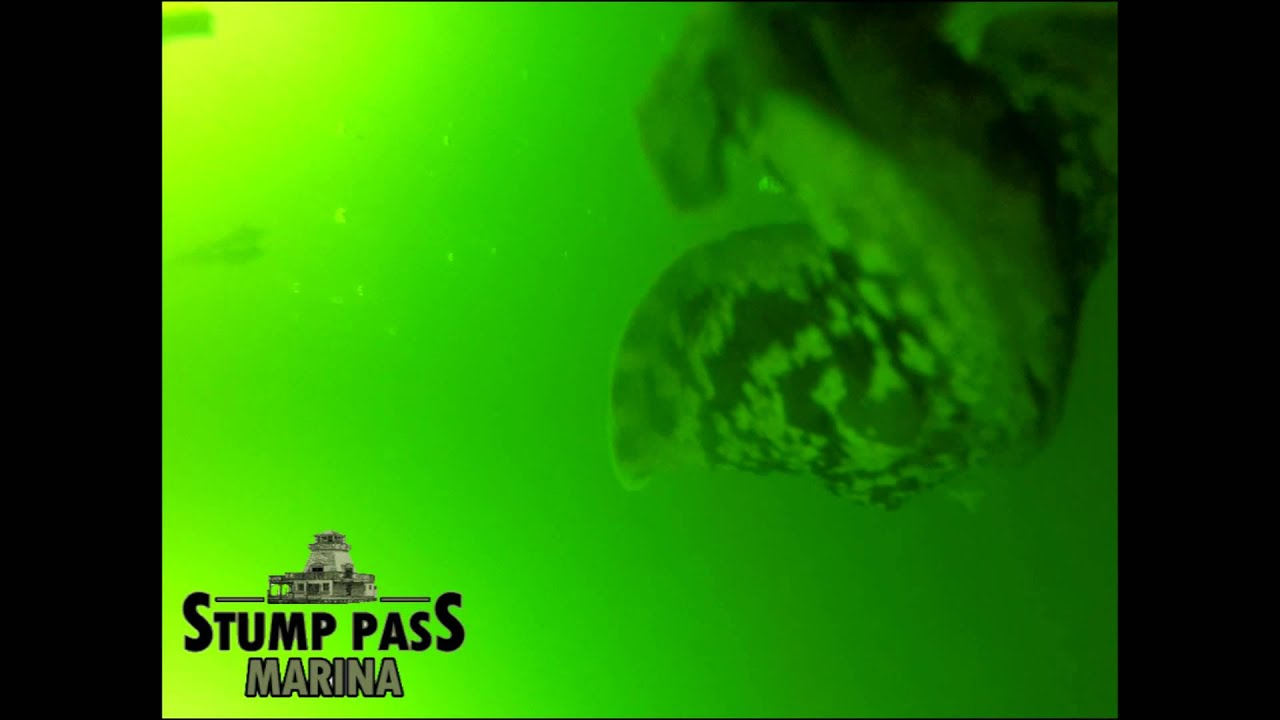snook sanctuary at night with underwater lights at stump pass, Reel Combo
