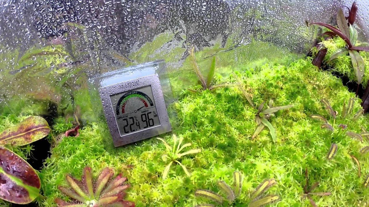 plante carnivore dans un terrarium