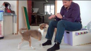 Tug Learns Obedience Retrieve From Brigitte Van Gestel!!!