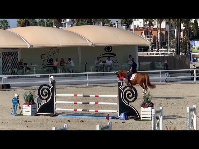 Stallion by El Torrero de Muze x Nabab de Reve b. 2014