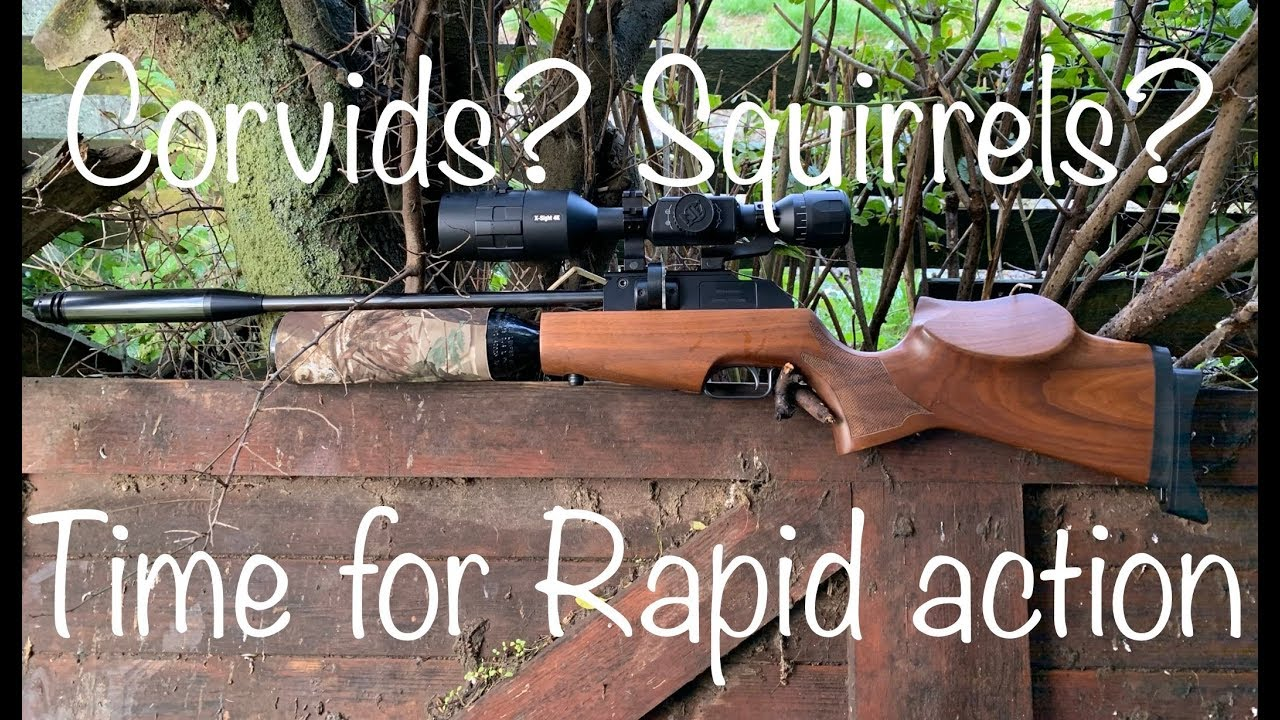 #20 Time For Some Rapid Action-Sunday Is Gunday