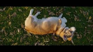 Był sobie pies - premierowy klip (premiera: 17.02.2017)