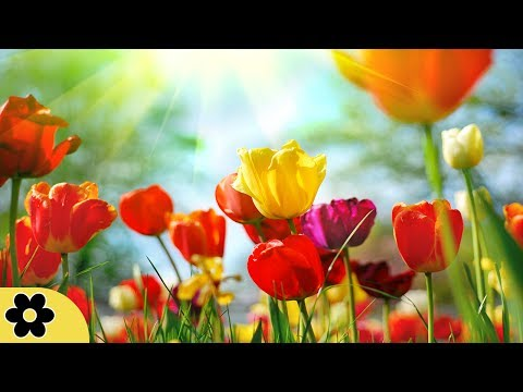 Meditation, Zen Music, Relaxation Music, Chakra, Relaxing Music for Stress Relief, Relax, ✿3172C