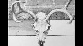 Artist Pencil Drawing Time Lapse - Deer Skull