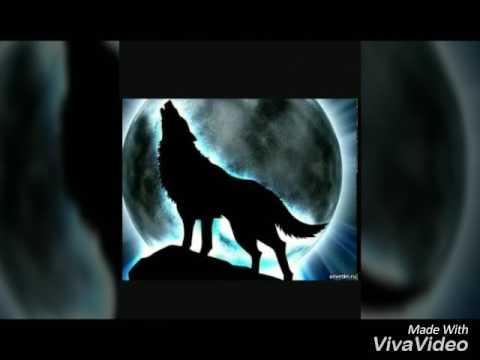 Фото волк