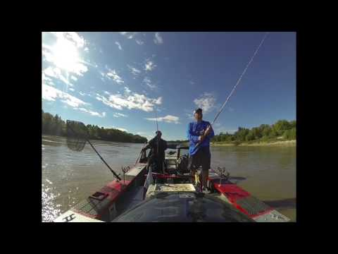 Walking Baits On The Red River In Canada