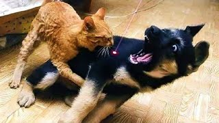 Pets Vs Laser Pointer - Funny Cat And Dog Reaction #25