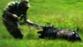 """Bow Hunting Pigs """"Cranky Boars & Bows"""""""