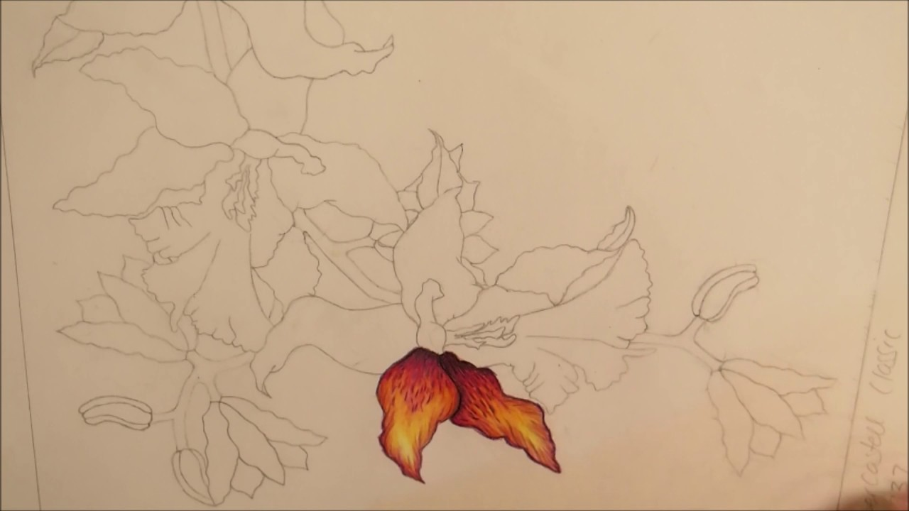 Orchid Petal Colouring Tutorial - YouTube