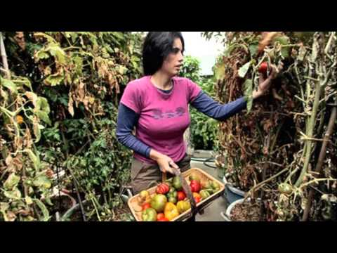 Self sustaining lifestyle grow your own food use solar power etc