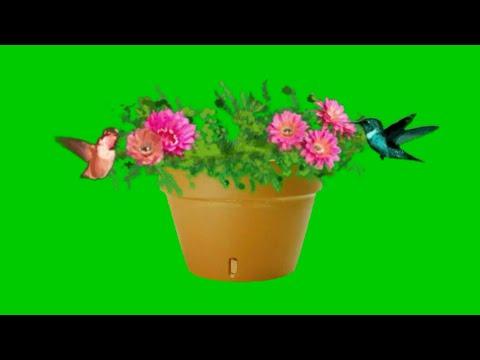 Green screen flower blossom #2.MUST WATCH effect that will shock you.Green screen flower bouquet thumbnail