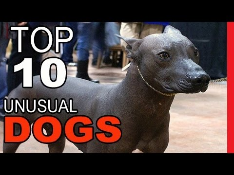 Top 10 Unusual Dog Breeds