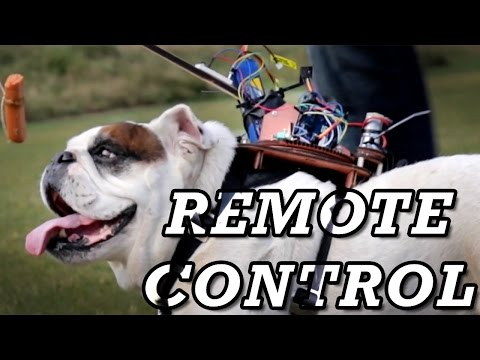 Biohacking a Dog