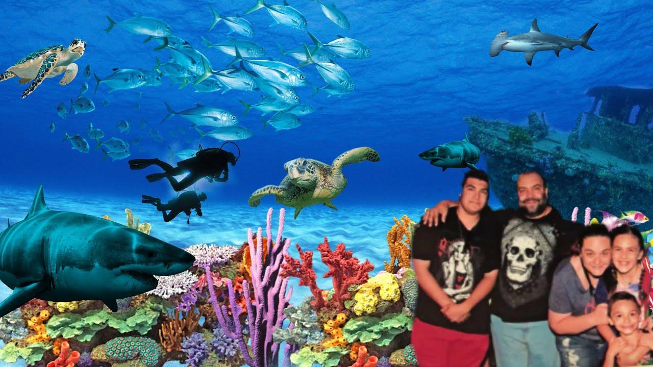 Adventures of The Camden Aquarium - YouTube